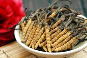 cordyceps-mens-health